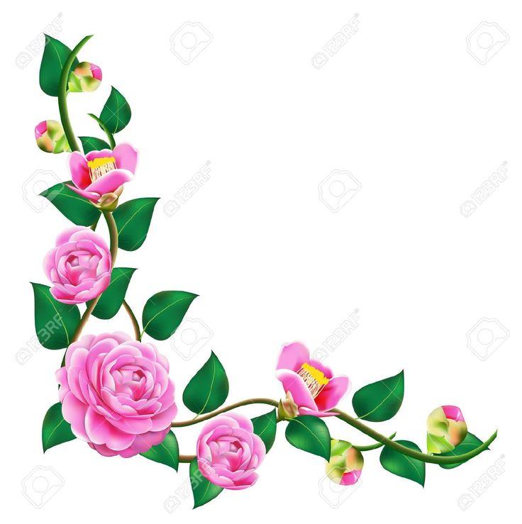 Camellia Flower Line Drawing : Camellia draw line pesquisa google camellias