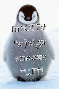 cutest penguin quotes - Google Search