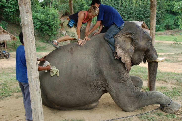 Dr. Kraft treating a 70 year old elephant in Thailand with the Erchonia laser
