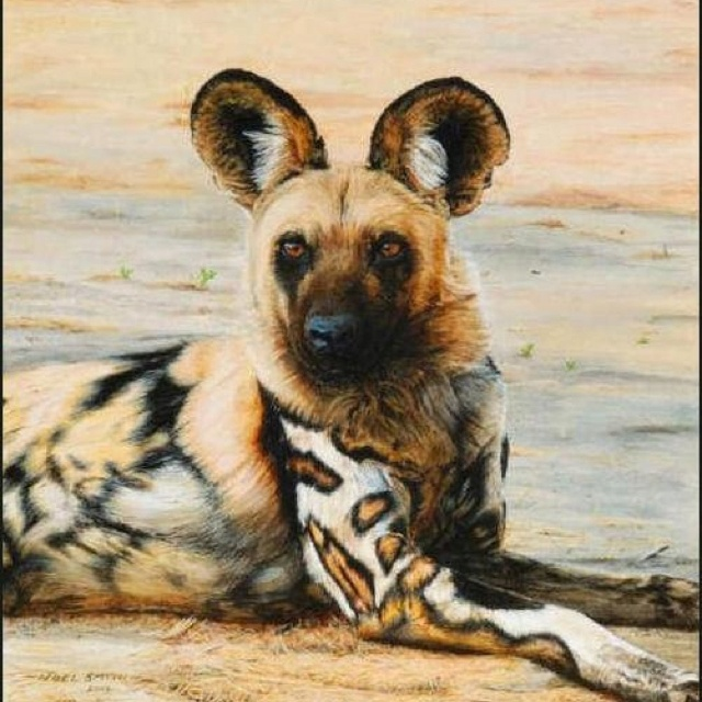 AFRICAN DOG....I want one!