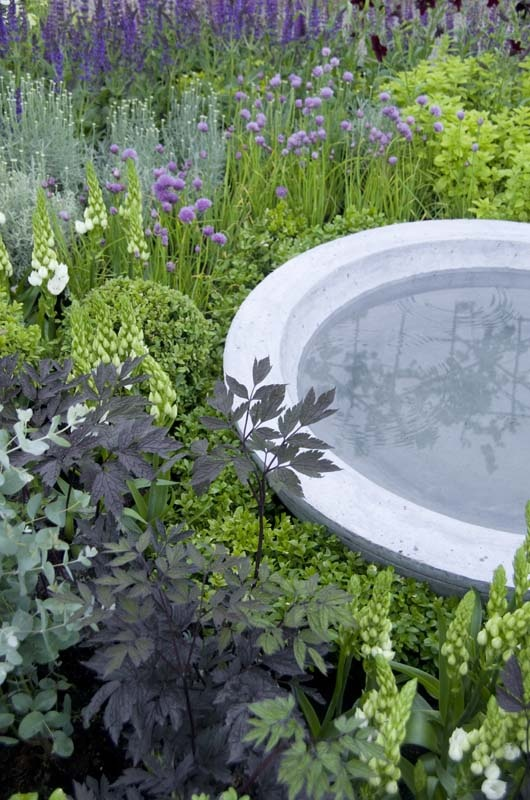 A low bird bath is at home amongst the shades of green and purple