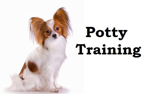 how to potty train a puppy quickly