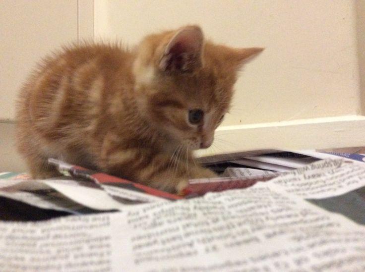 New kitten.... How cut!?