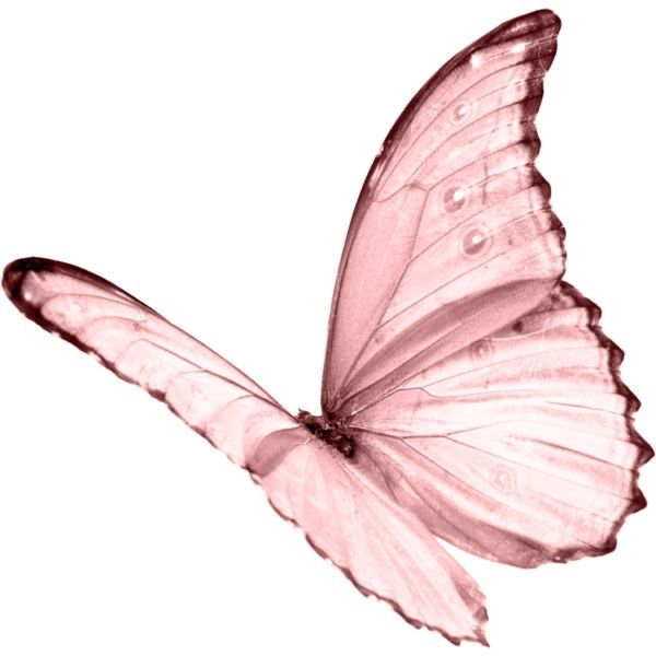 Pin By Kaly On Png White Butterfly Tattoo Butterfly Pink Butterfly