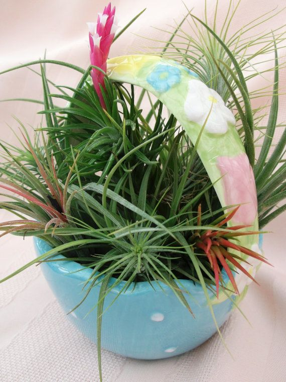 Ceramic Easter Basket Airplant Arrangement by ThePerfectPlant