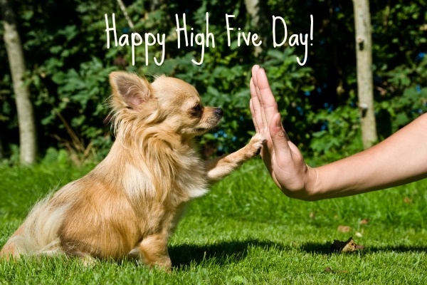 Happy National High Five Day! The smallest of high fives will make you feel better.