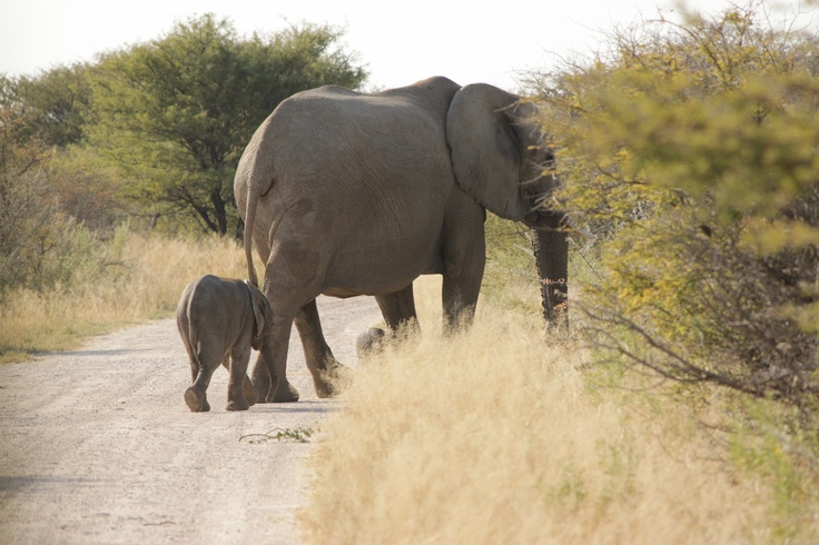Mother and daughter cross the road. #Namibia