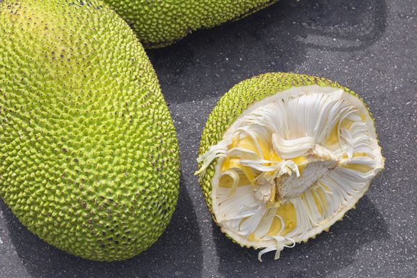 Jackfruit is becoming a favorite meat substitute (seriously) for vegetarians.  Nutritional benefits: This unique fruit contains vitamins B6 and C, plus potassium.  ~ Interested in a personal coach? Let's connect! Send an message to me on FB and let me know a little about your goals and lifestyle! We'll work together to pick the right program for you! #21DayFixApproved #EndTheTrend #GetFit2StayHealthy #Nutrition