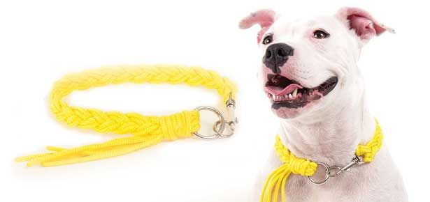 Diy Craft Braided Dog Collar With Tassel Dogs Diy Projects For