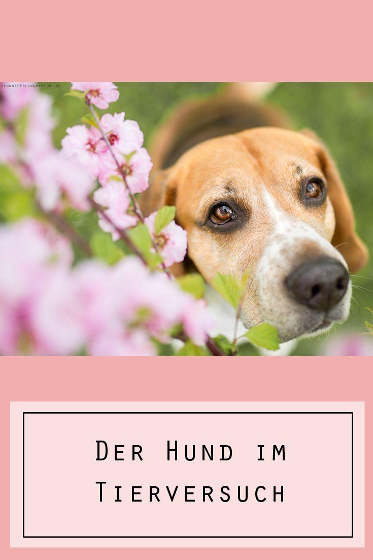 Der Hund Im Tierversuch Lustige Hunde Fotos Hunde Susse Hundefotos