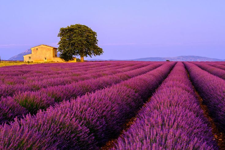 Lavendelfeld Provance Frankreich Fotokunst In 2020 Fotokunst