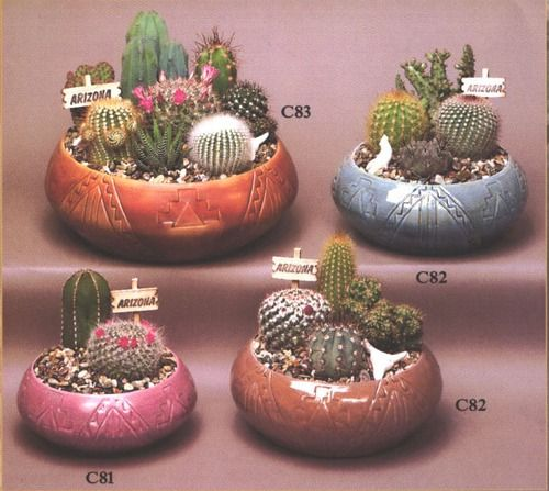 cactus gardens- So cute! Unfortunately I can even kill cacti... just check out the 3 in my window sill...