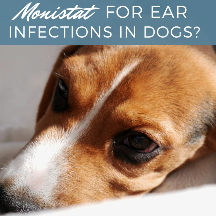 Can monistat treat your dogs ear infection dogs ears