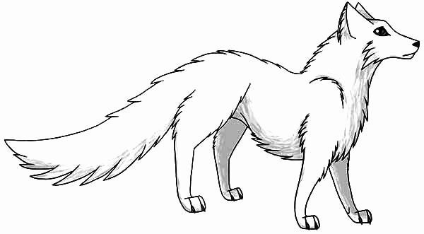 Arctic Fox Coloring Page Lovely Manga Draw Of Artic Fox Coloring Pages Fox Coloring Page Arctic Fox Color Animal Coloring Pages