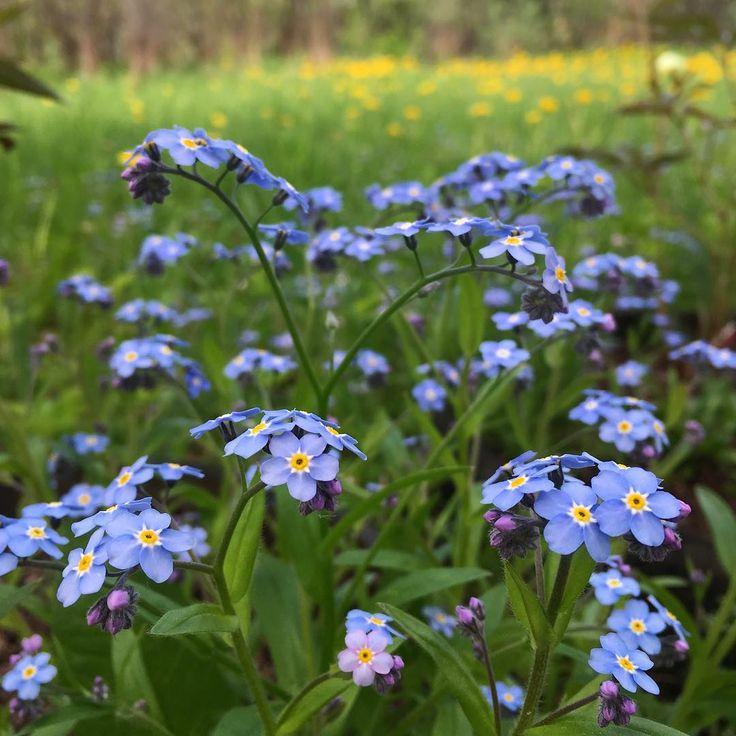 Все-таки когда четкая смена сезонов, то каждый сезон ждешь с нетерпением. Намучаешься, намерзнешься в зиму, и весной как ребенок радуешься мелочам, маленькому жучку-паучку, милому нежному цветку, солнечному дню. Хорошо весной) Летом запаримся, будем о снеге мечтать) ��������  http://gelinshop.com/ipost/1523191141834359336/?code=BUjdkX2DwIo