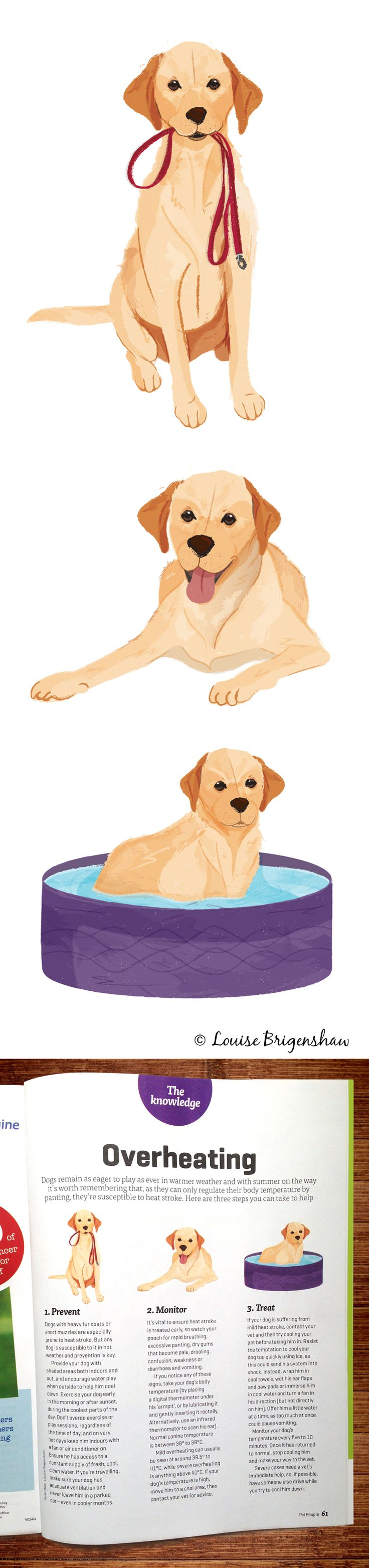 Dog illustrations by Louise Brigenshaw for Pet People Magazine.