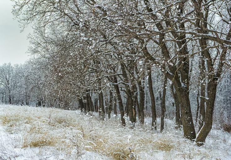 Snow-covered forest by Natalia Flora on 500px