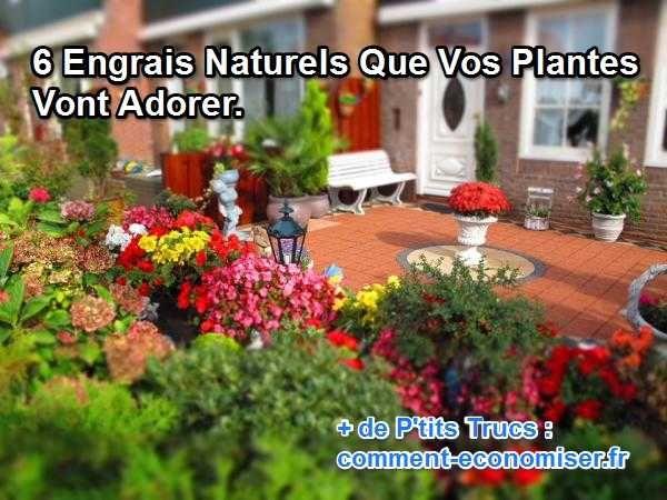 Il est inutile de déverser des produits chimiques dans votre jardin. Vous pouvez vous-mêmes faire votre propre engrais naturel.  Découvrez l'astuce ici : http://www.comment-economiser.fr/engrais-naturel-que-les-plantes-adorent.html?utm_content=buffer00e4e&utm_medium=social&utm_source=pinterest.com&utm_campaign=buffer