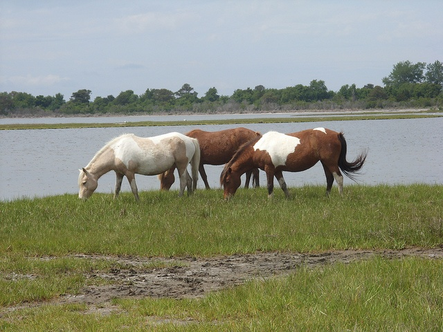 chincoteague single parents Good advice on things to do in chincoteague  and riding horses graduated from penn state proud parents  to stay in chincoteague island: apartments.