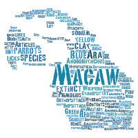 Tagxedo -- Create word clouds in any shape, color and size.  Possibilities for scrapbooking, crafting and gifts are endless!