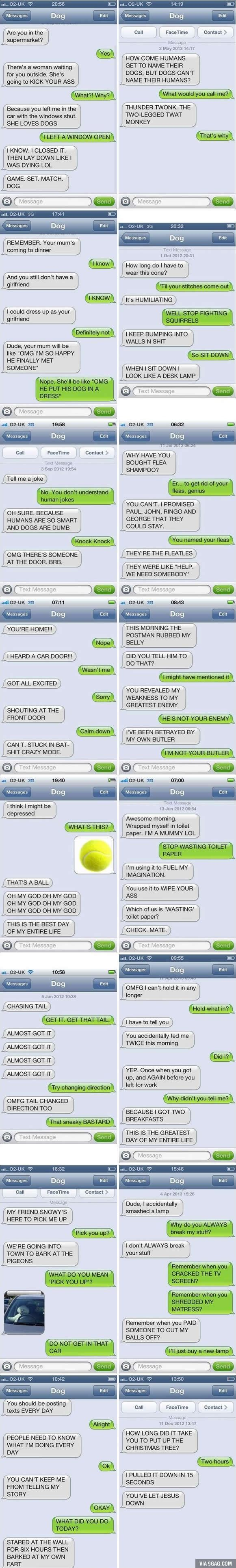 If Your Dog Knew How To Text, These Would Be Your Conversations. - 9GAG