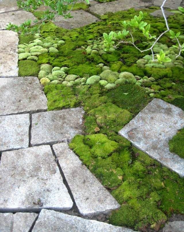 design contemporain en dalles de pierre et mousse verte