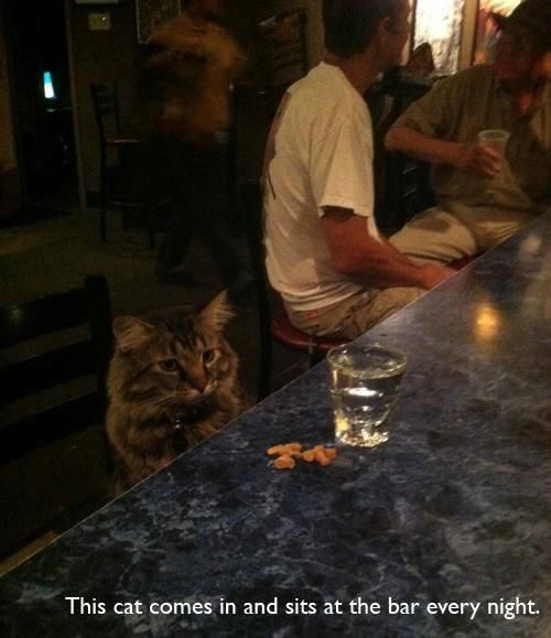So a cat walks into a bar, and.....