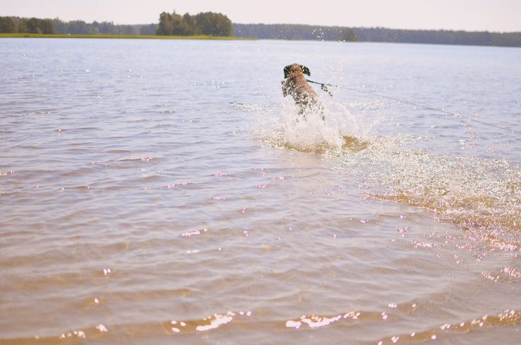 Even if your summer hair gets ruined in the ocean water it doesn't matter! Bavarian Mountain Hound running after a perfect stick. Let's go!! www.visitporvoo.fi
