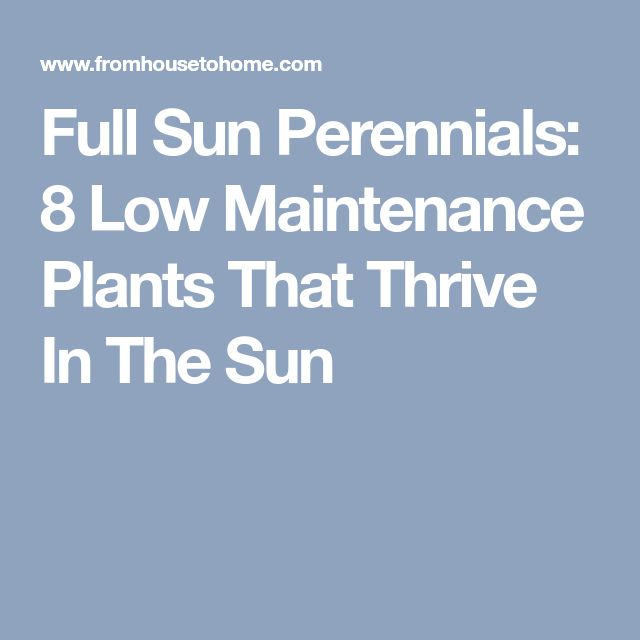 Best 25 full sun perennials ideas on pinterest for Low maintenance full sun perennials