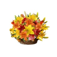http://www.sofiaraj.com/flowers/send_lilies_online