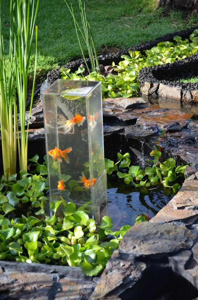 17 mejores ideas sobre estanques de peces en pinterest for Plantas para estanque exterior