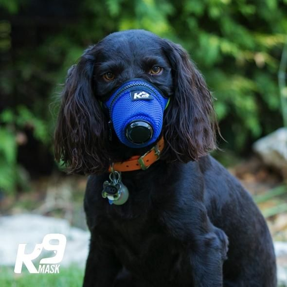 K9 Mask Dog Pollution Air Filter Masks Protect Dogs From Wildfire