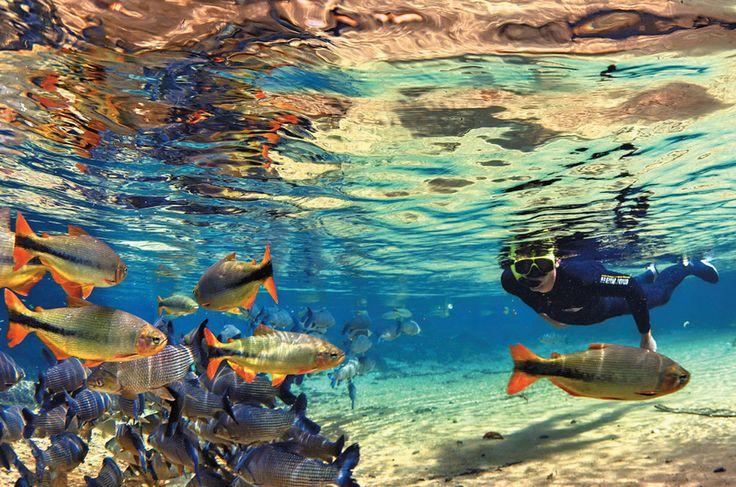 Bonito - Mergulho com peixes 02