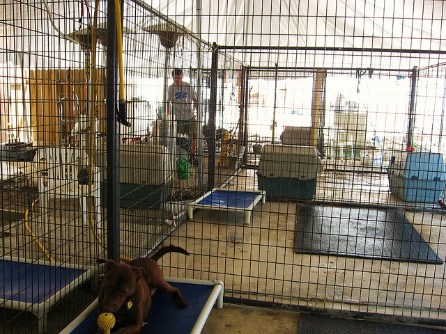 Petco Cages For Big Dogs