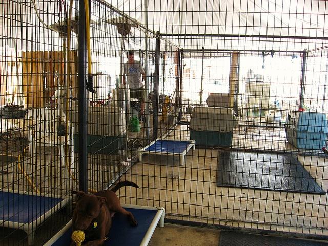 Big Dog Cages