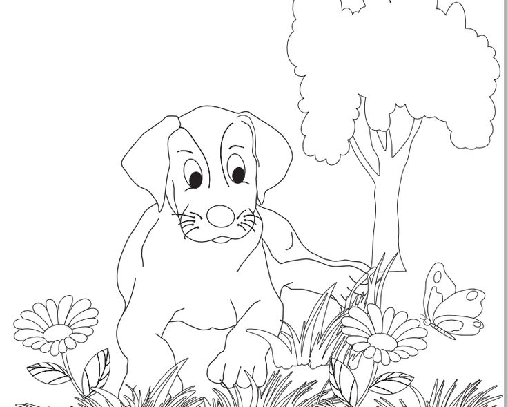 Talk To Your Children About Animals In Shelters Animal Rescue Childrens Coloring Page