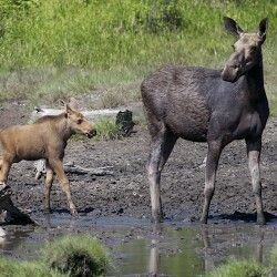 400014d69f208c559f9ebe17d52f97c4 climate change needle felting 96 best maine's wildlife images on pinterest animal kingdom