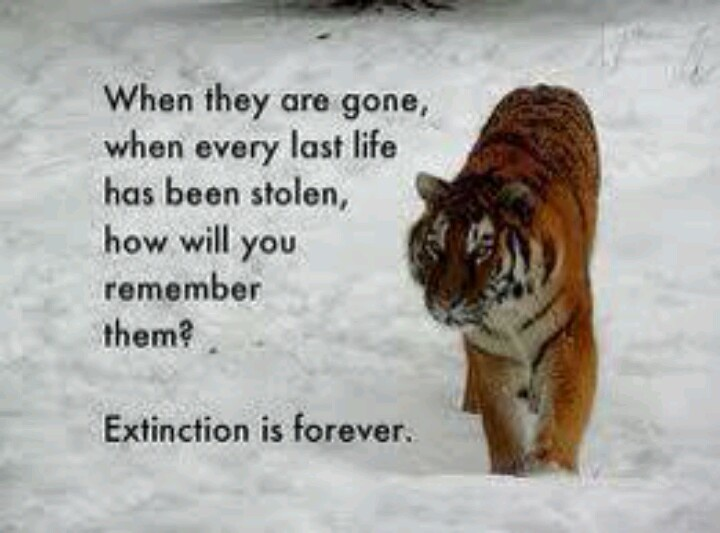 17 Best Images About Animal Conservation On Pinterest