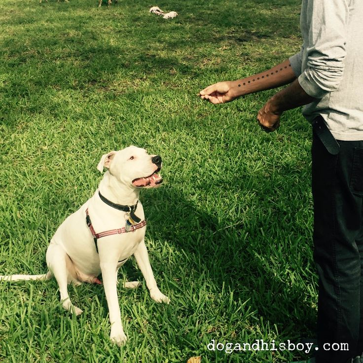 how to train a deaf dog hand signals