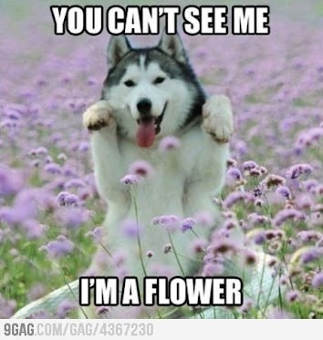 you can't see me. I'm a flower.
