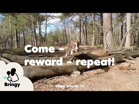 Come - reward - repeat - lifehack #5 by Bringy
