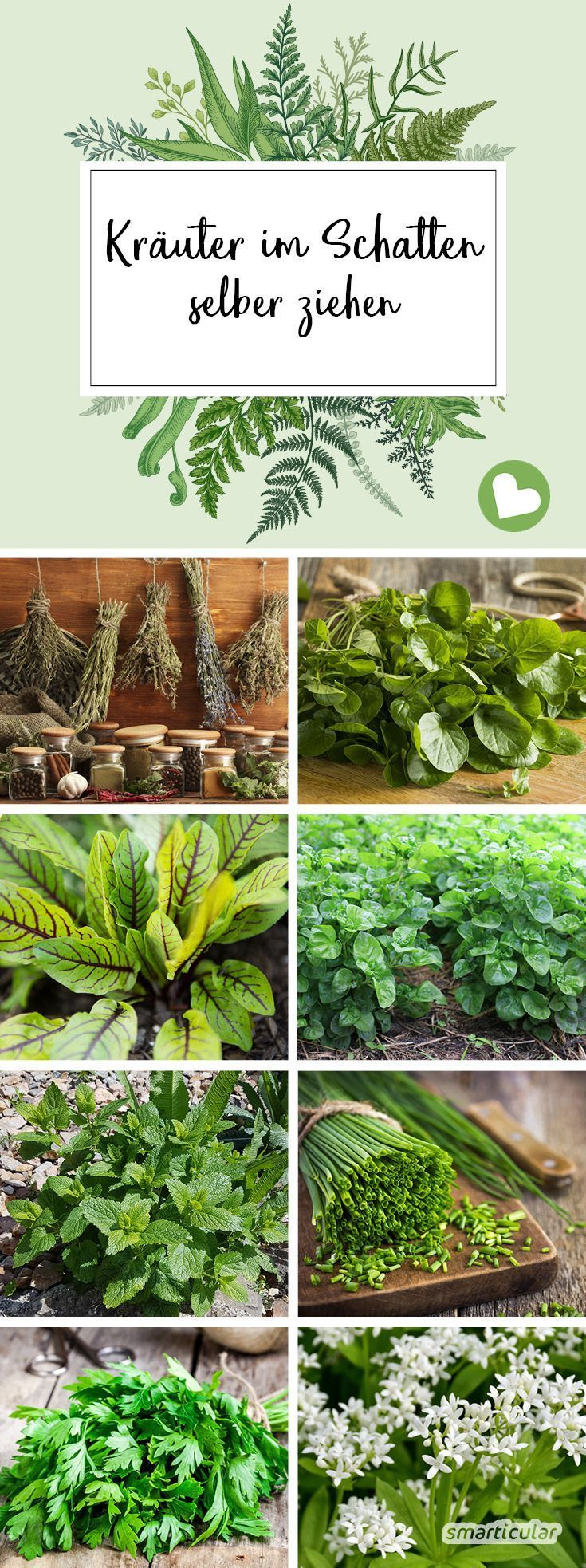 Kräuter für Garten und Balkon: Diese Kräuter wachsen im Schatten