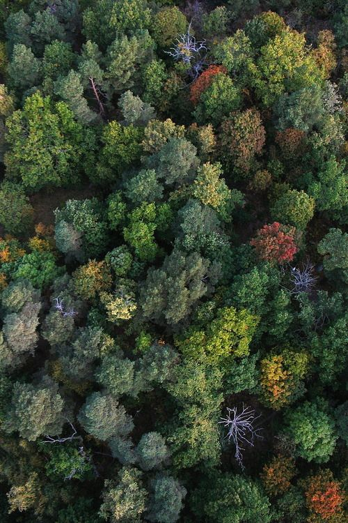 Autumn colored trees seen from above.