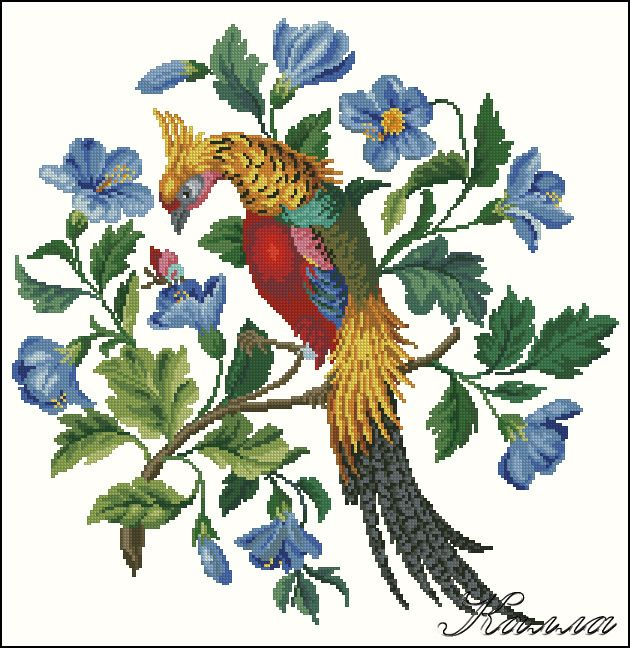 Золотой фазан на гибискусе