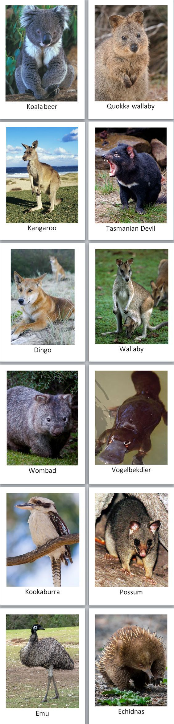 my continent box - Australia: Australian animal cards: