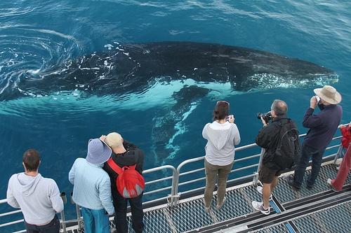 4-hour Hervey Bay Whale Watching Tour, #HerveyBay, #Australia