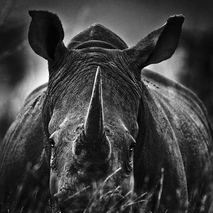 20 Photos That Get You Up Close With Rhinos, Lions And Elephants (Photo: Laurent Baheux)