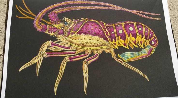Spiny Lobster Page 45 By Caroline W Coloring BooksAdult