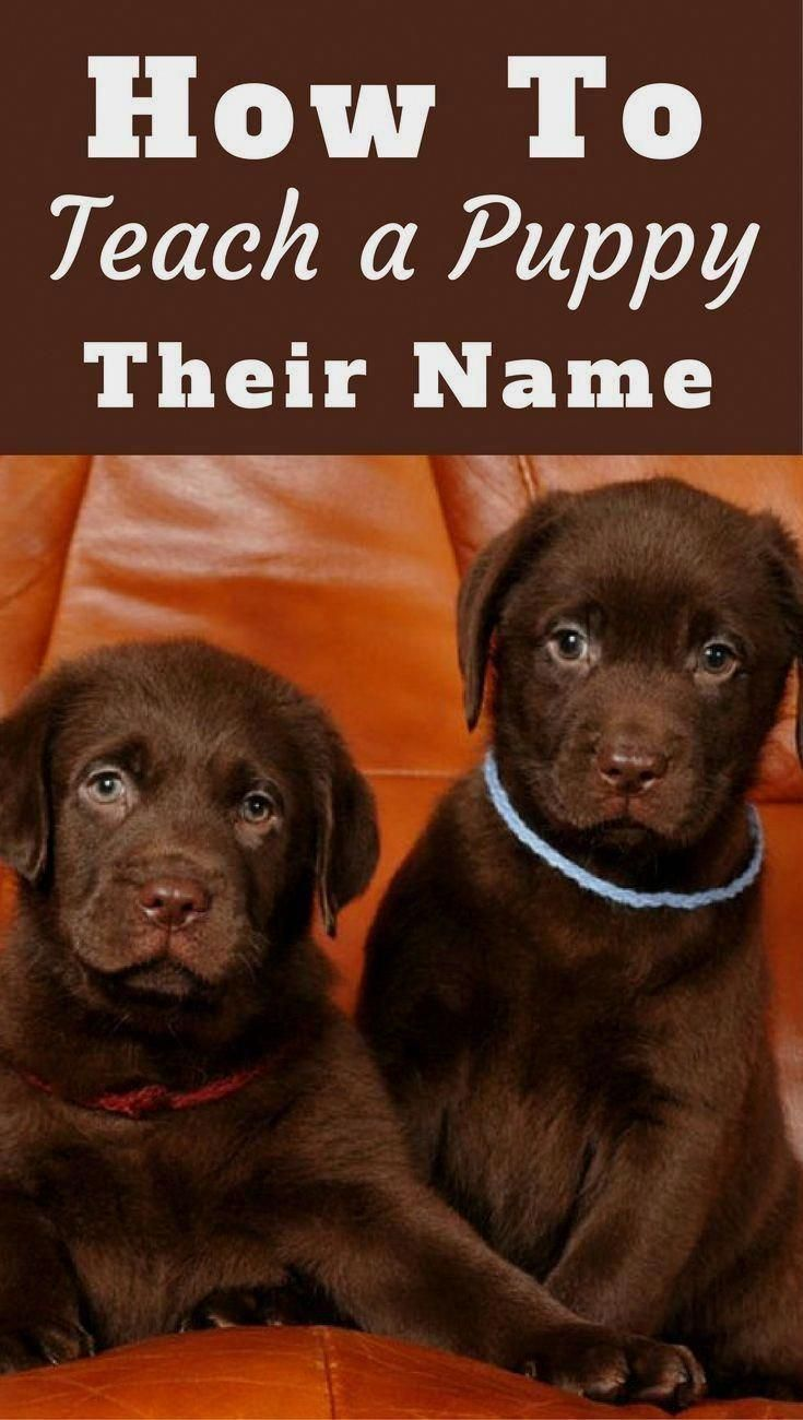 Neat Combined Cool Dog Training Shop Birthday Deals Puppy Names