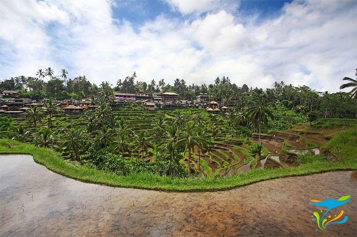 Berada tidak jauh dari Ubud, kawasan Tegallalang menawarkan pemandangan teras-teras persawahan yang indah. Kontur wilayah yang berbukit-bukit tidak menghalangi para petani untuk menanam padi, untuk mengakalinya mereka membuat teras-teras. More info: http://fantasticbali.com/tempat-wisata/tegallalang.htm